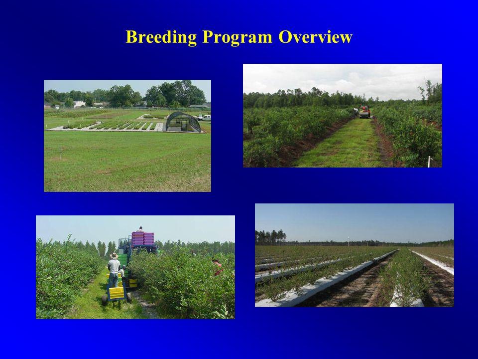 Breeding Program Overview