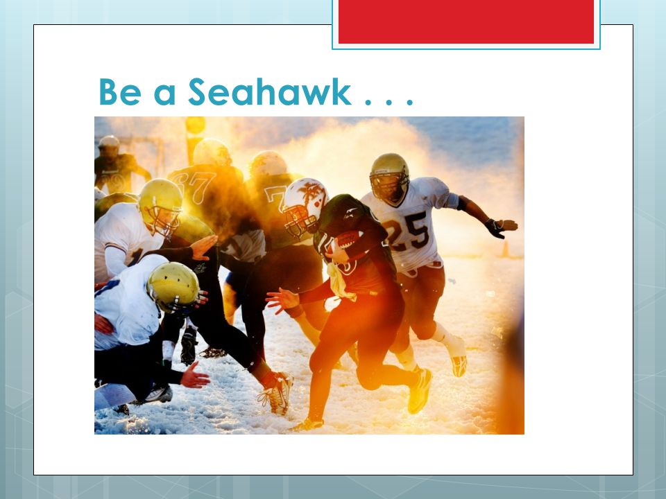 Be a Seahawk . . .