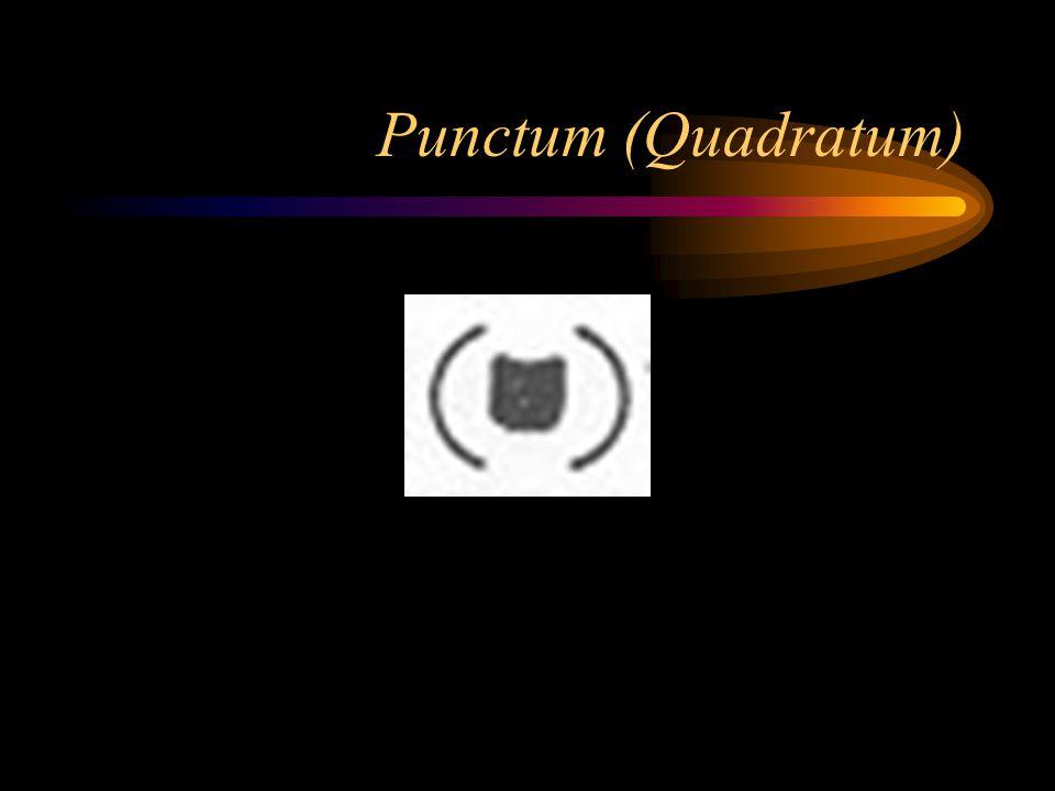 Punctum (Quadratum)