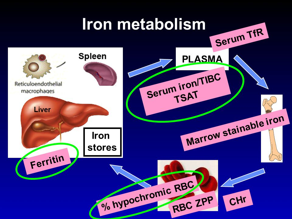 Iron metabolism Serum TfR PLASMA Serum iron/TIBC TSAT