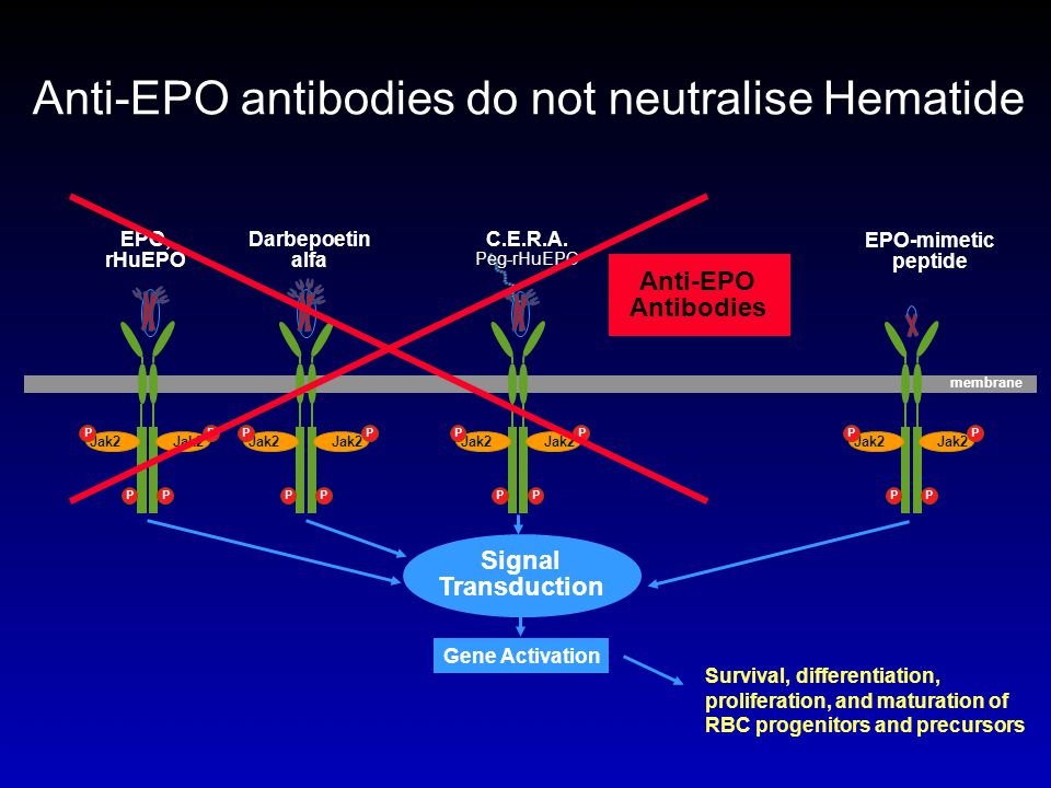 Anti-EPO antibodies do not neutralise Hematide