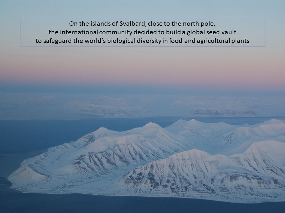 On the islands of Svalbard, close to the north pole,