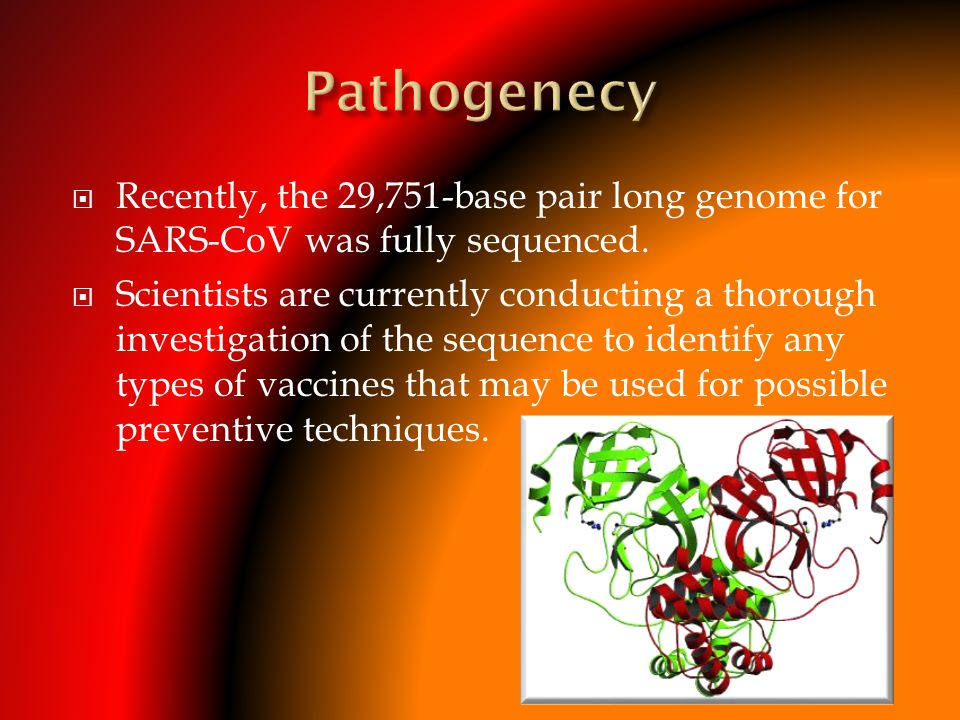 Pathogenecy Recently, the 29,751-base pair long genome for SARS-CoV was fully sequenced.