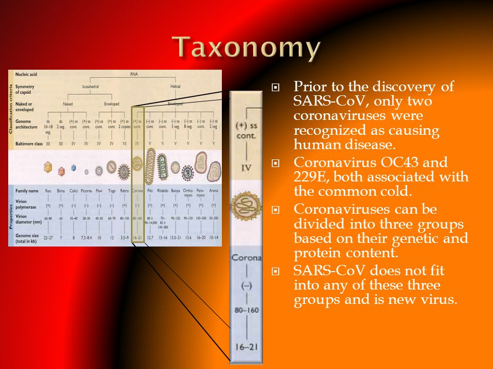 Taxonomy Prior to the discovery of SARS-CoV, only two coronaviruses were recognized as causing human disease.