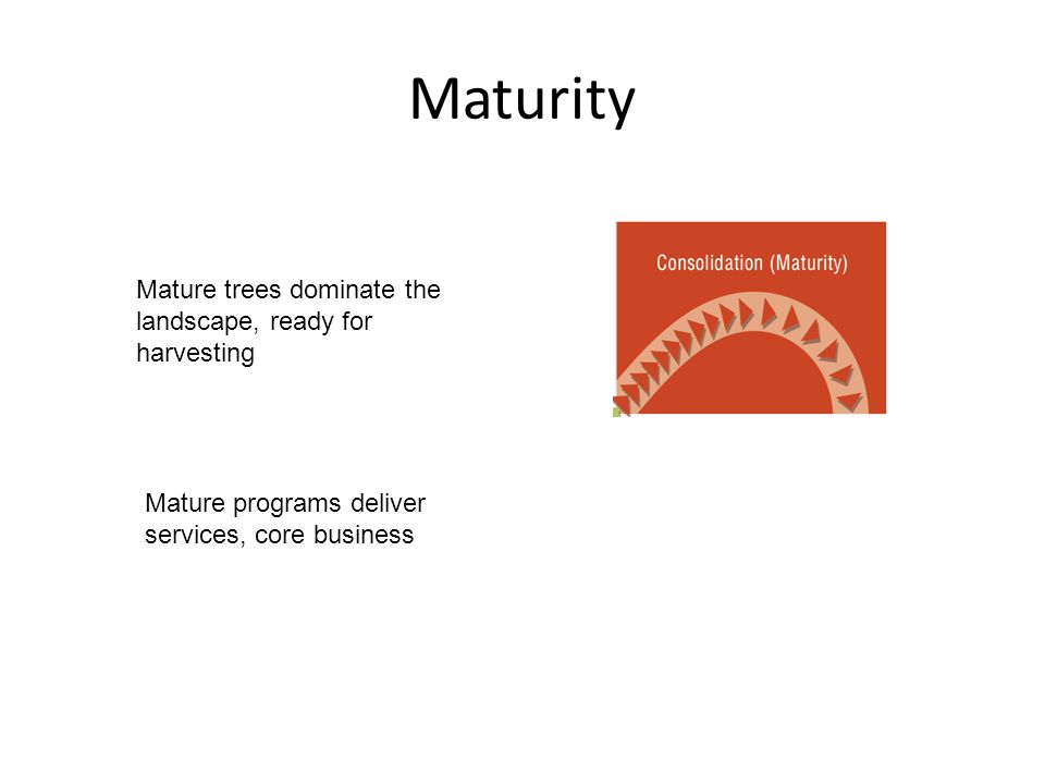 Maturity Mature trees dominate the landscape, ready for harvesting