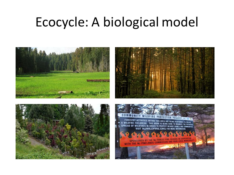 Ecocycle: A biological model