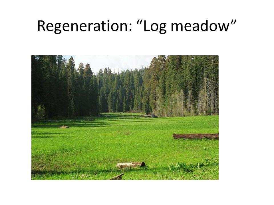 Regeneration: Log meadow