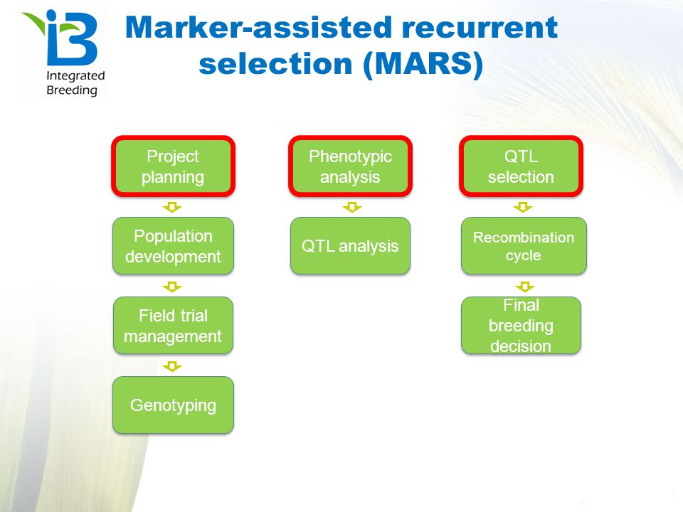 Marker-assisted recurrent selection (MARS)