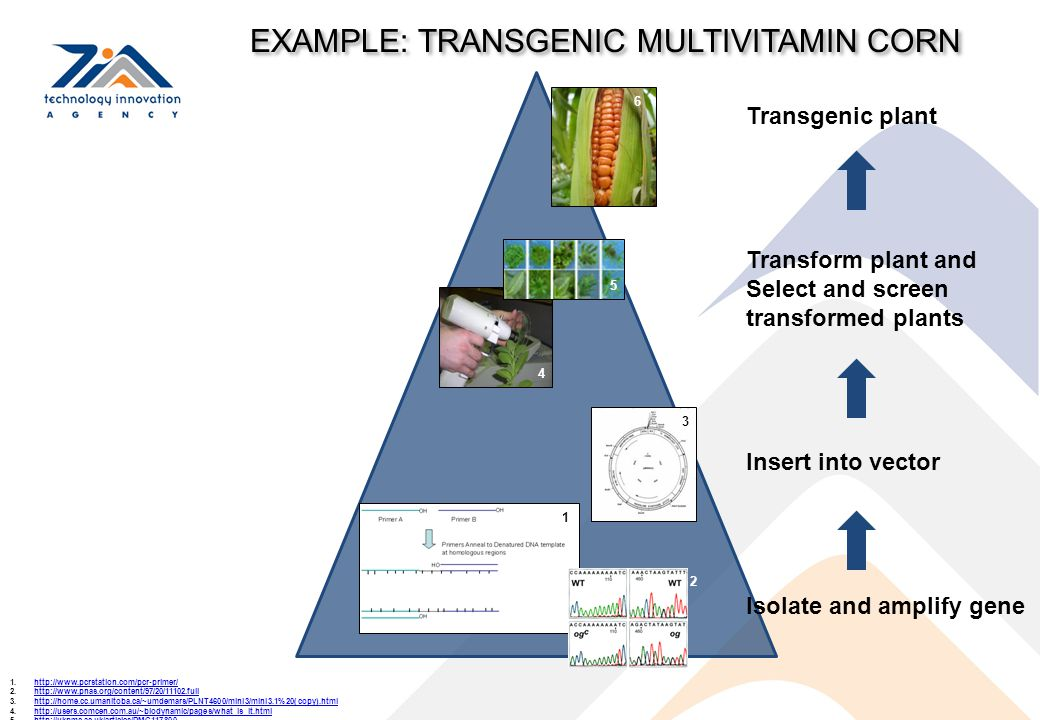 EXAMPLE: TRANSGENIC MULTIVITAMIN CORN