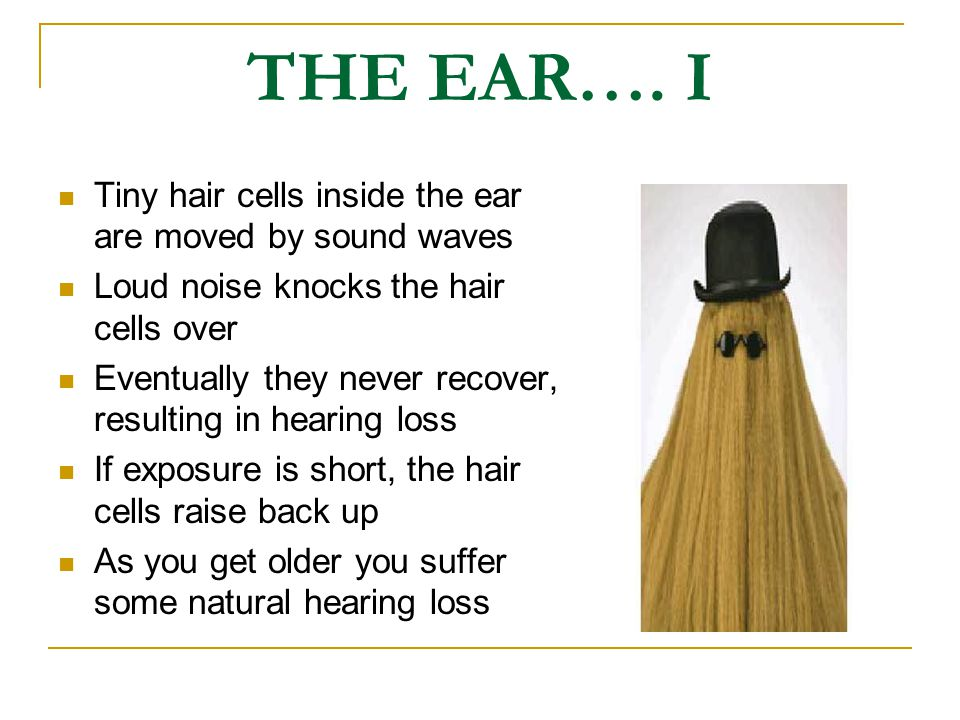 THE EAR…. I Tiny hair cells inside the ear are moved by sound waves