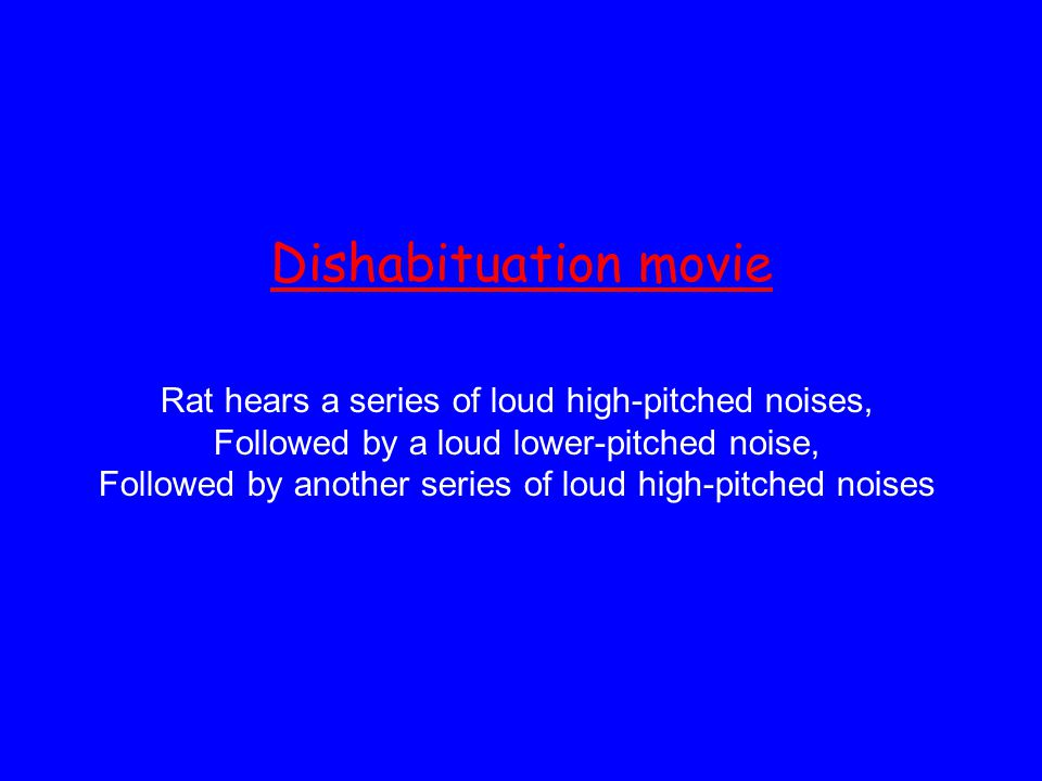 Dishabituation movie Rat hears a series of loud high-pitched noises,