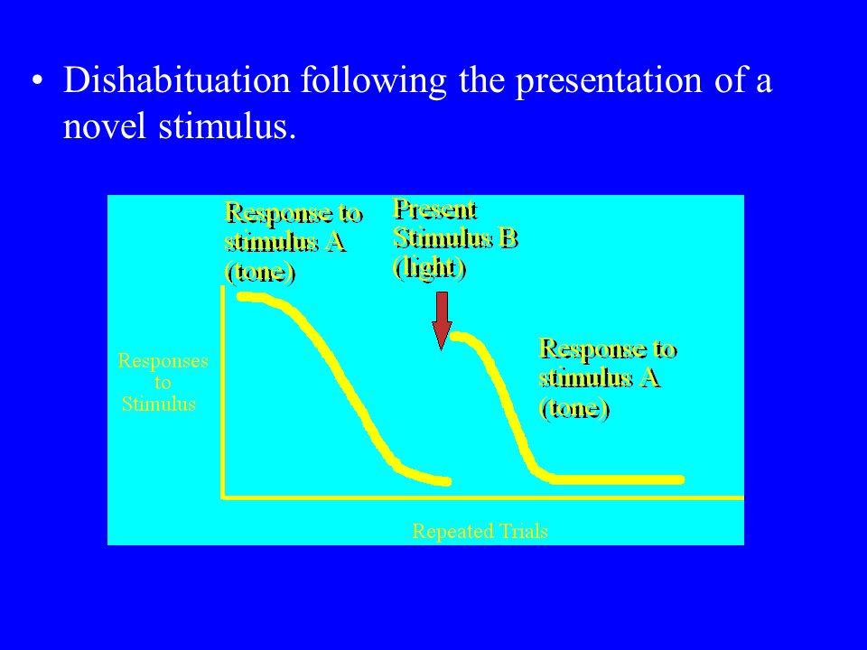 Dishabituation following the presentation of a novel stimulus.