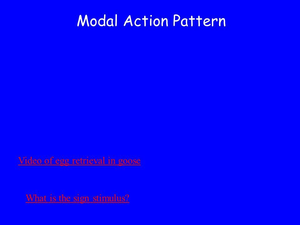 Modal Action Pattern Video of egg retrieval in goose