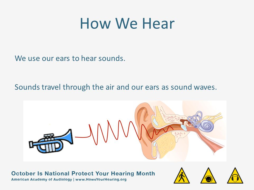 How We Hear We use our ears to hear sounds.