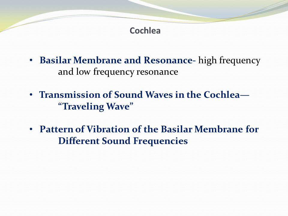 Cochlea Basilar Membrane and Resonance- high frequency. and low frequency resonance. Transmission of Sound Waves in the Cochlea—