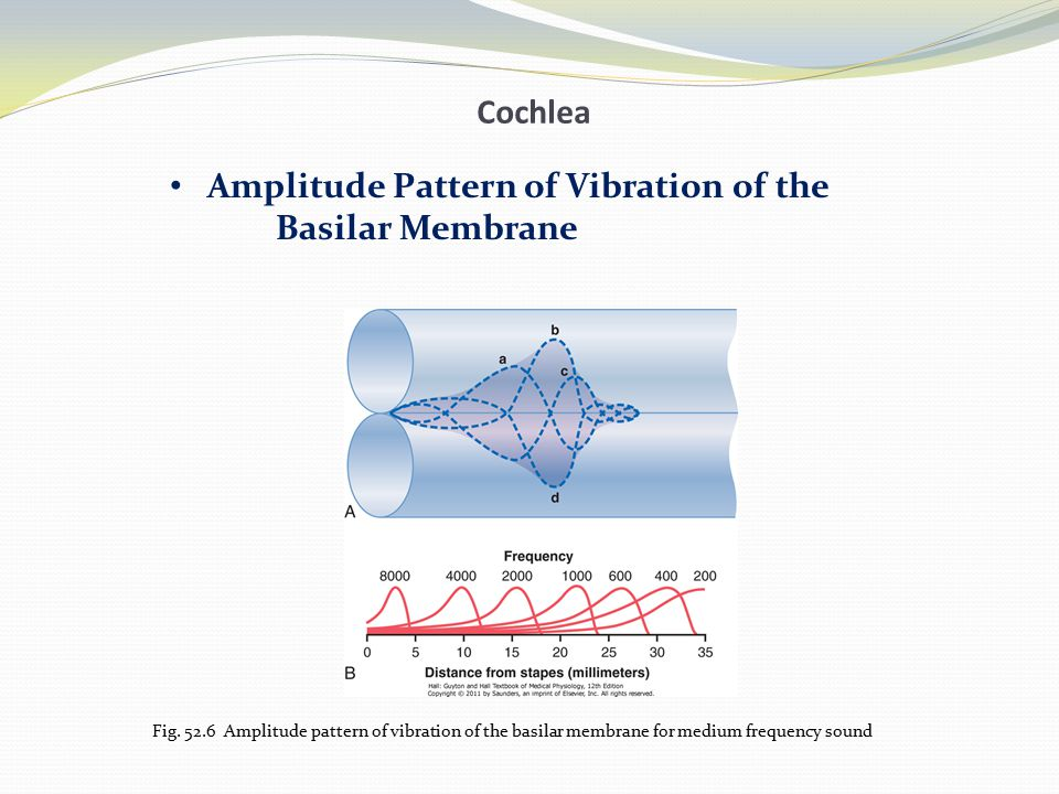 Amplitude Pattern of Vibration of the Basilar Membrane