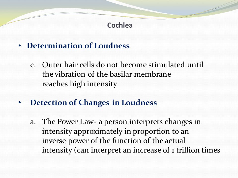 Cochlea Determination of Loudness. Outer hair cells do not become stimulated until. the vibration of the basilar membrane.