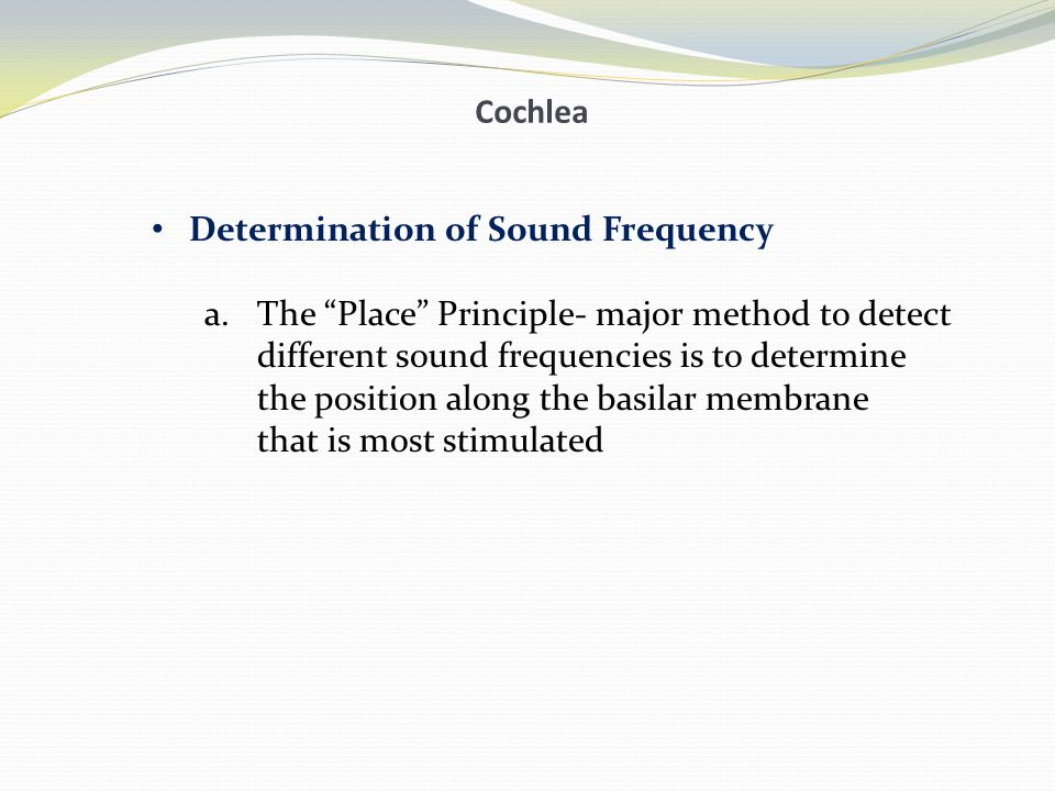 Cochlea Determination of Sound Frequency. The Place Principle- major method to detect. different sound frequencies is to determine.