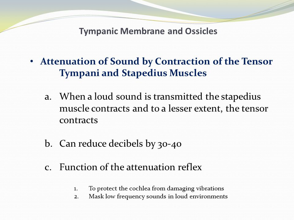 Tympanic Membrane and Ossicles