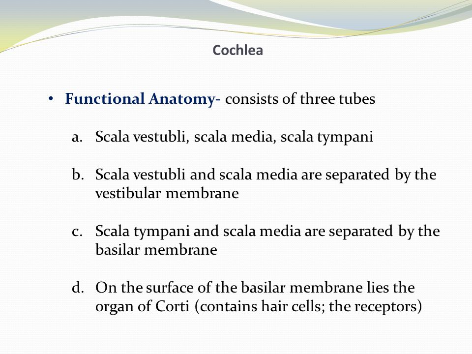 Cochlea Functional Anatomy- consists of three tubes. Scala vestubli, scala media, scala tympani.