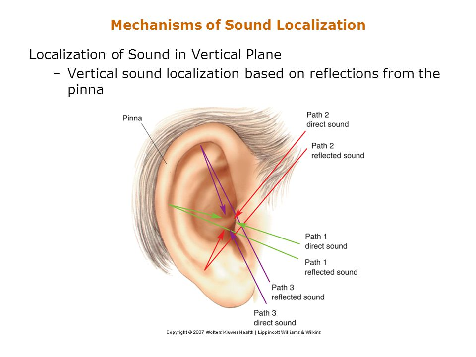 Mechanisms of Sound Localization