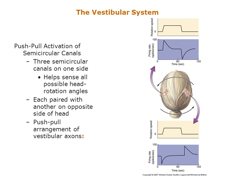 The Vestibular System Push-Pull Activation of Semicircular Canals