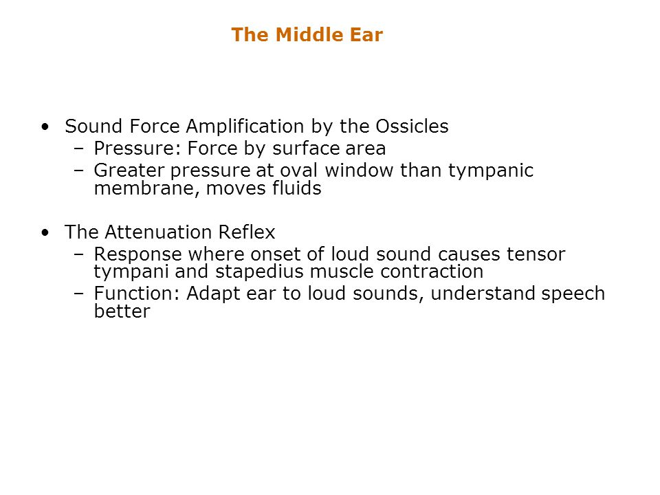 The Middle Ear Sound Force Amplification by the Ossicles. Pressure: Force by surface area.