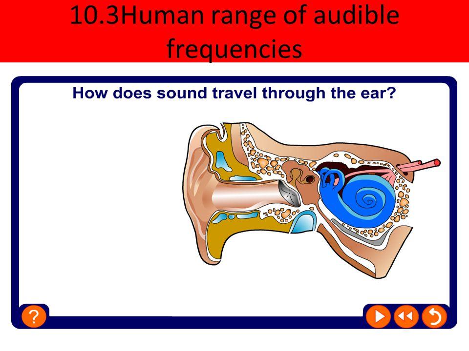 10.3Human range of audible frequencies