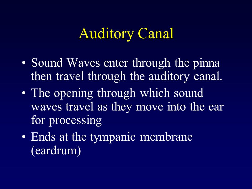 Auditory Canal Sound Waves enter through the pinna then travel through the auditory canal.
