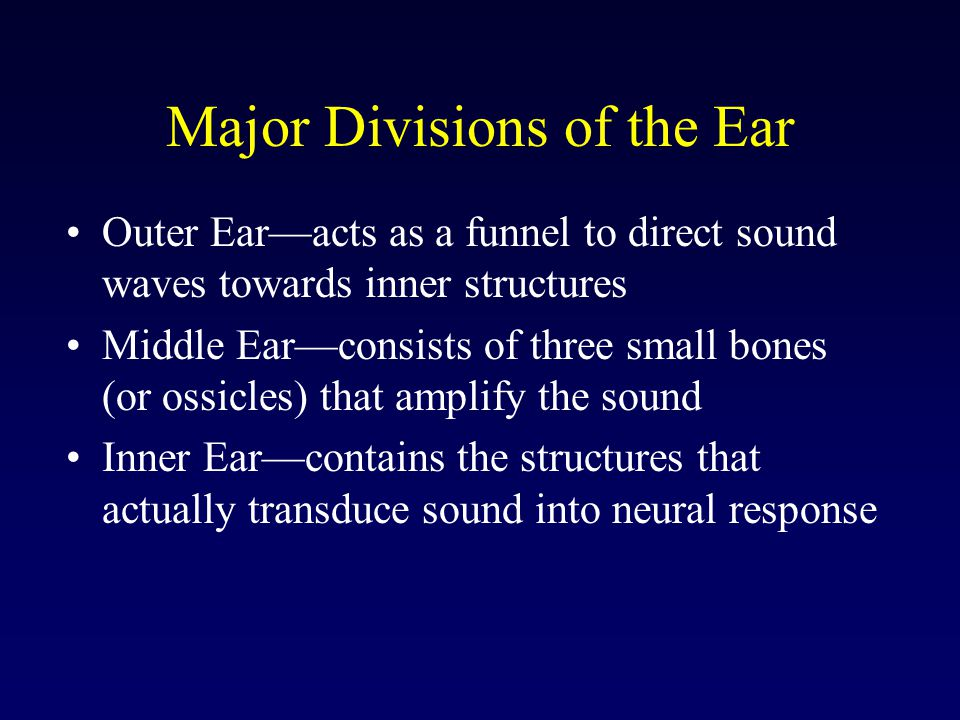 Major Divisions of the Ear