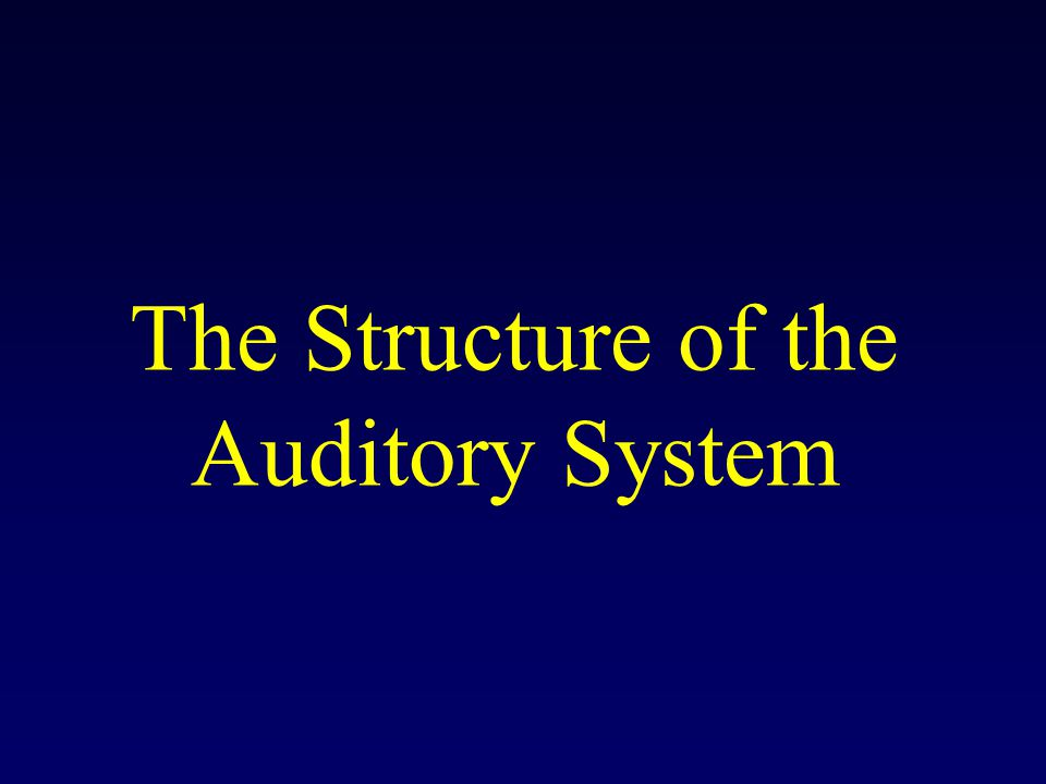 The Structure of the Auditory System