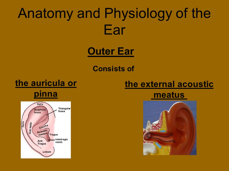understanding the causes and treatment of ear problems and hearing loss Otosclerosis usually causes a conductive hearing loss, a hearing loss caused by a problem in the outer or middle ear less frequently, otosclerosis may cause a sensorineural hearing loss (damaged sensory cells and/or nerve fibers of the inner ear), as well as a conductive hearing loss.