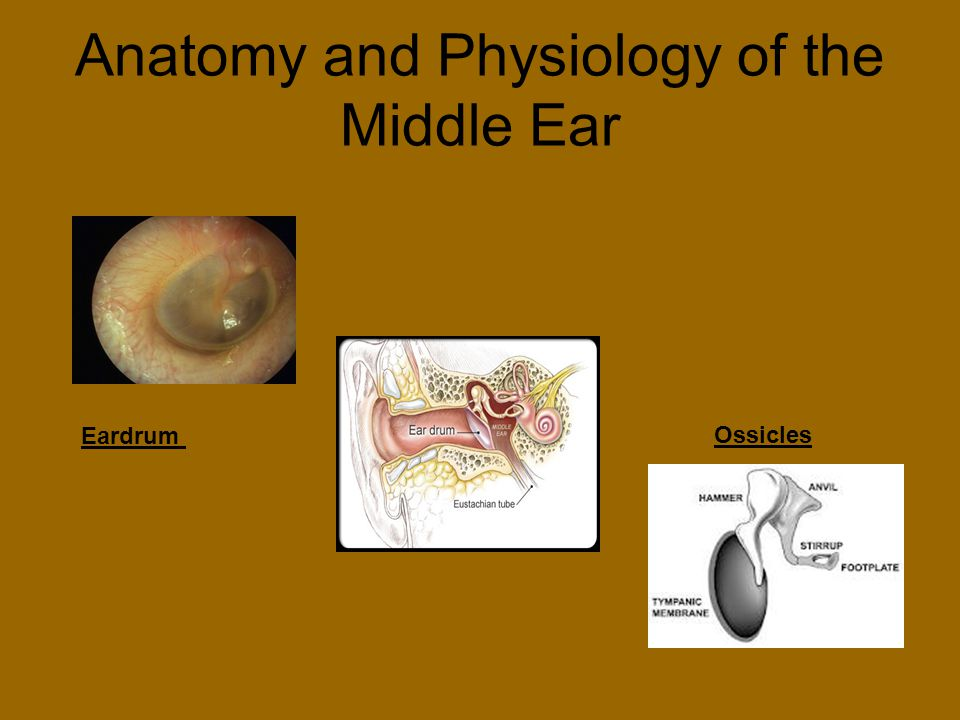 Anatomy and Physiology of the Middle Ear