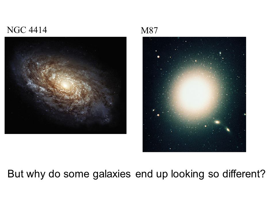 But why do some galaxies end up looking so different