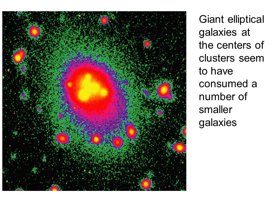 Giant elliptical galaxies at the centers of clusters seem to have consumed a number of smaller galaxies