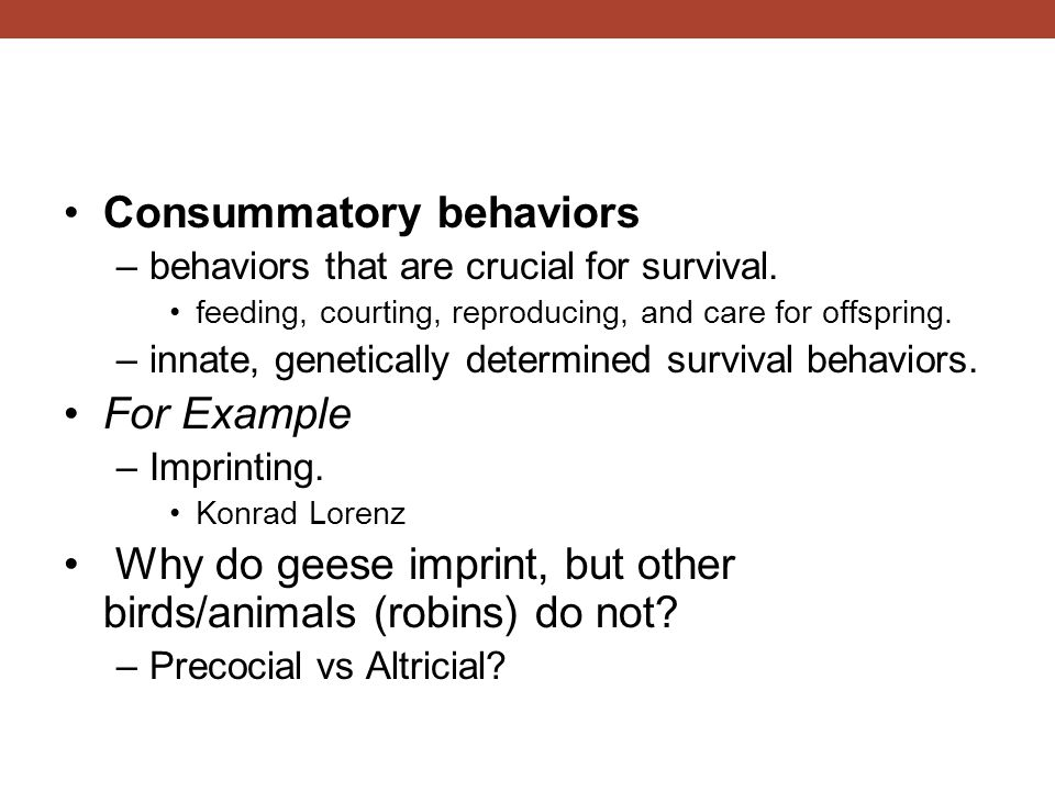 Consummatory behaviors