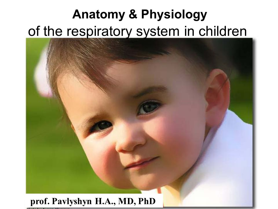 anatomy and physiology of respiratory system pdf