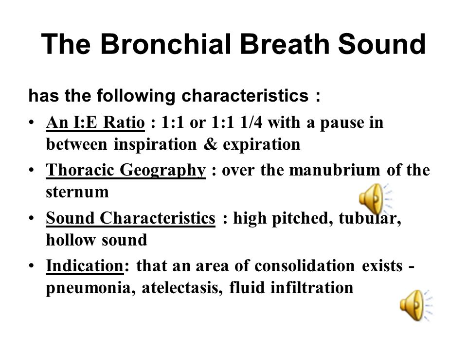 The Bronchial Breath Sound