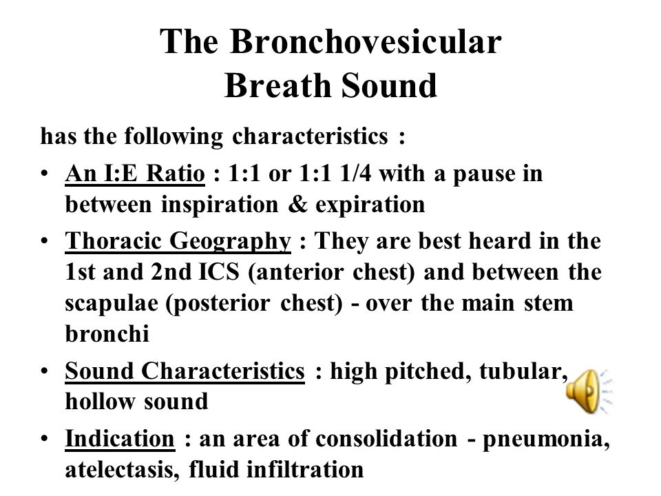 The Bronchovesicular Breath Sound
