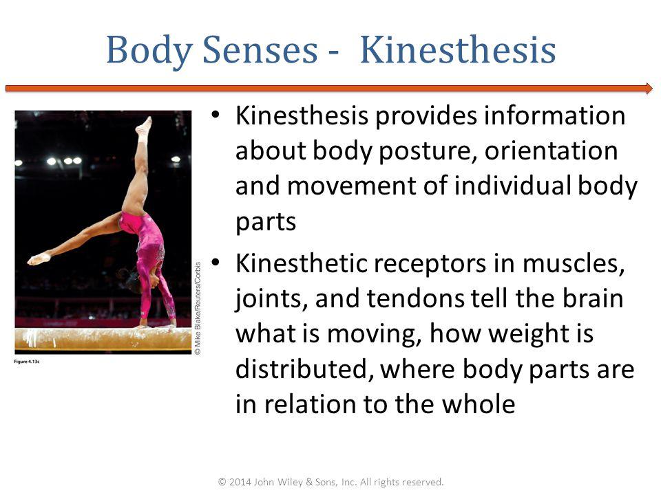 Body Senses - Kinesthesis