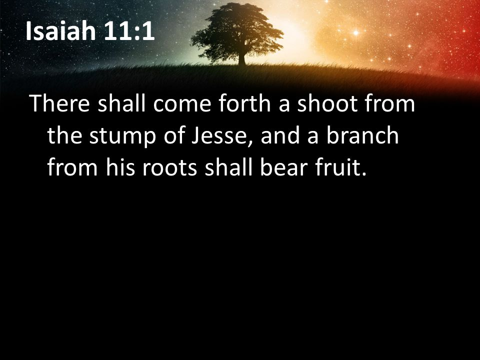 Isaiah 11:1 There shall come forth a shoot from the stump of Jesse, and a branch from his roots shall bear fruit.