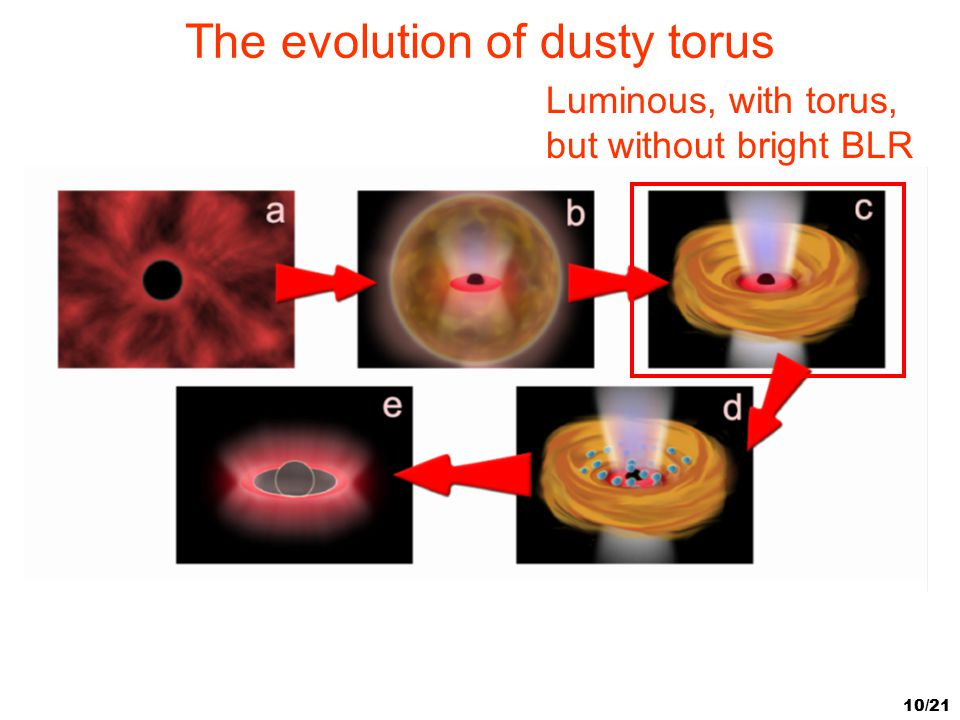 The evolution of dusty torus