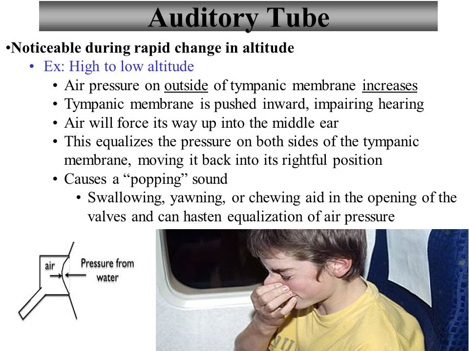 Auditory Tube Noticeable during rapid change in altitude
