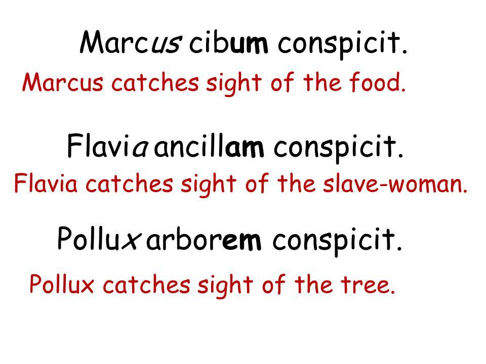 Marcus cibum conspicit.