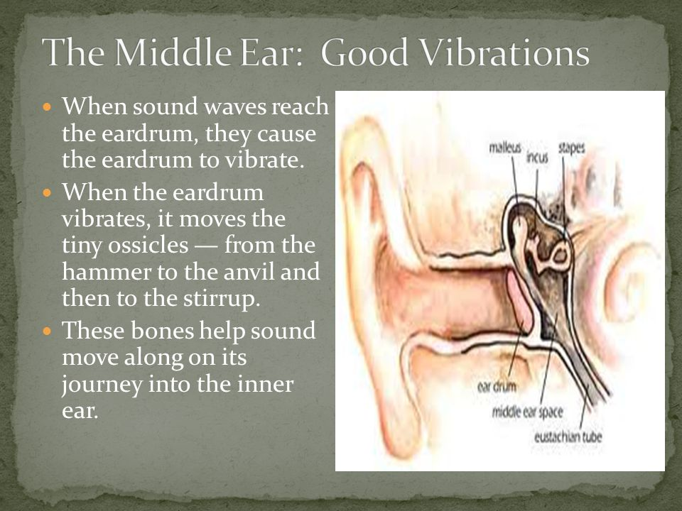 The Middle Ear: Good Vibrations