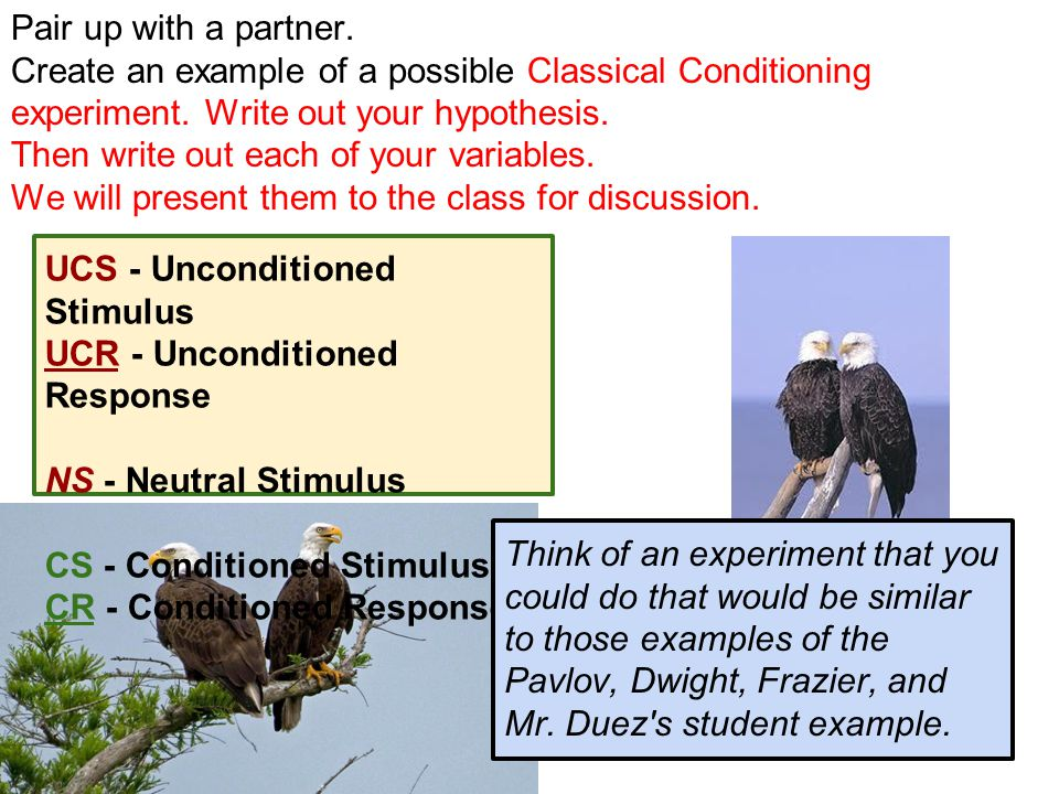 Pair up with a partner. Create an example of a possible Classical Conditioning experiment. Write out your hypothesis.