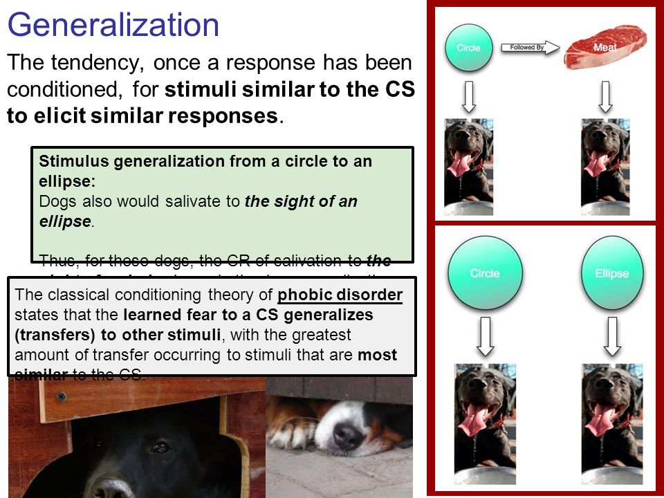 Generalization The tendency, once a response has been conditioned, for stimuli similar to the CS to elicit similar responses.