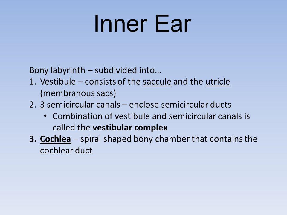 Inner Ear Bony labyrinth – subdivided into…