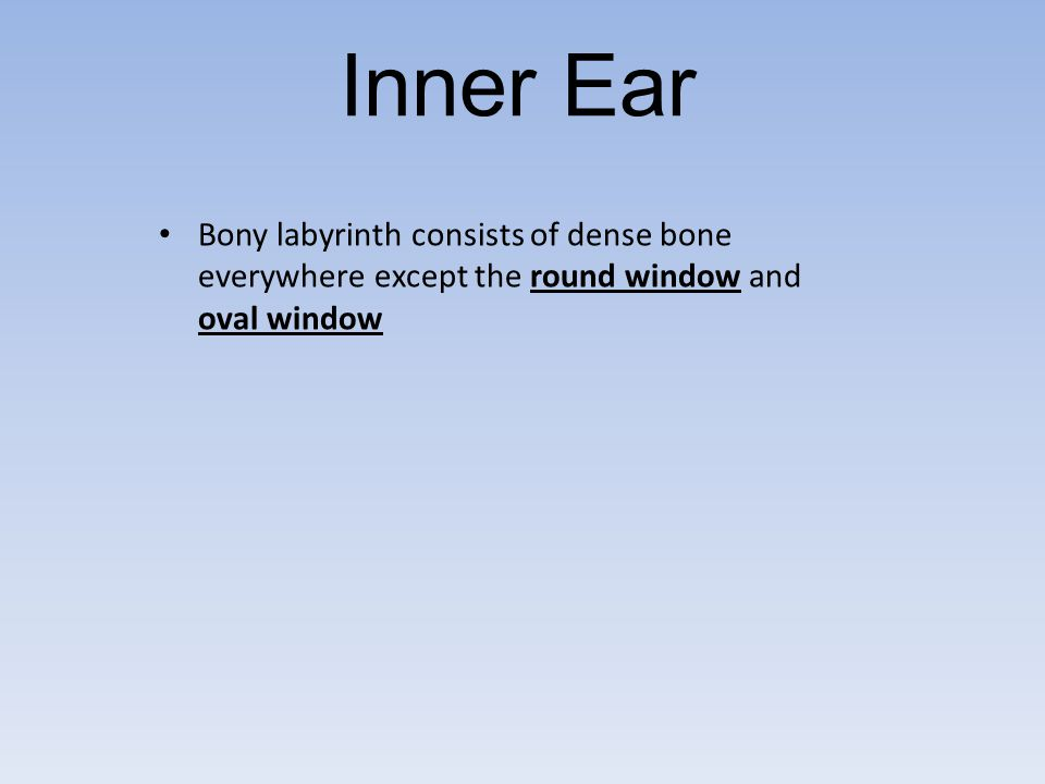 Inner Ear Bony labyrinth consists of dense bone everywhere except the round window and oval window