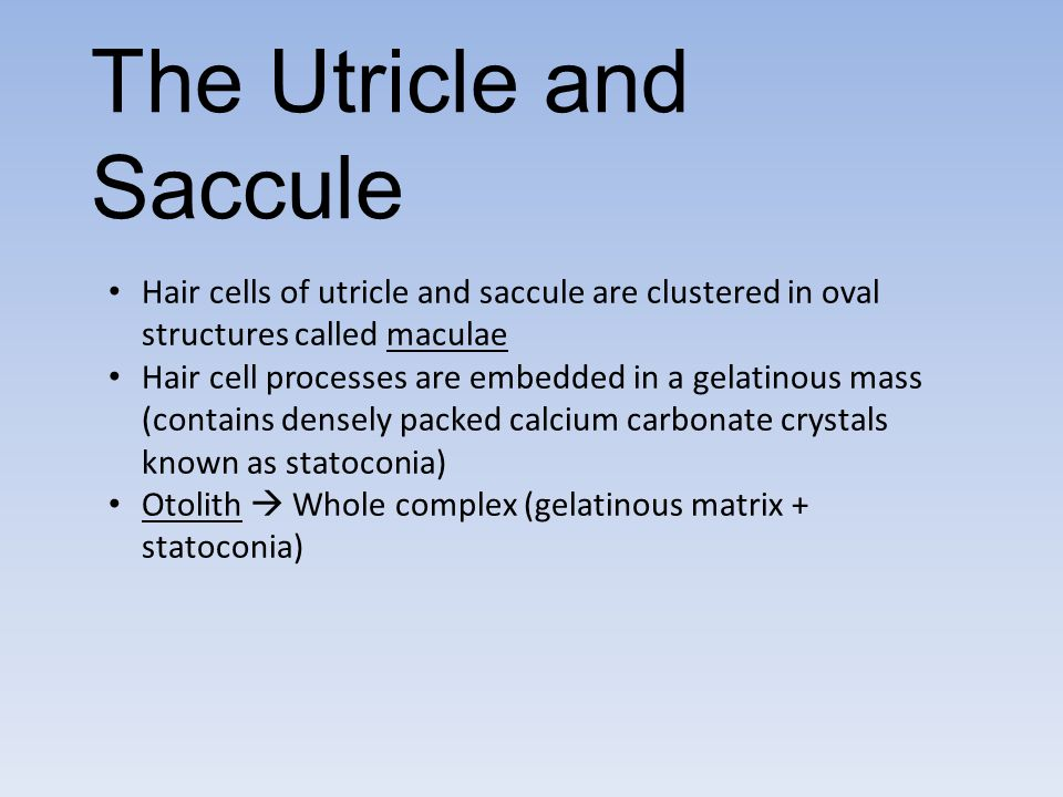 The Utricle and Saccule